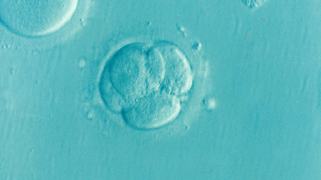 Cultivarea embrionilor la FIV