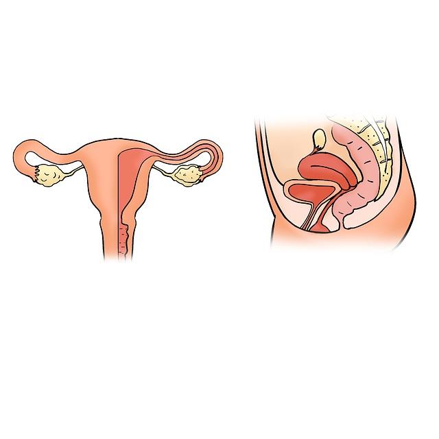 Ce rol are uterul?