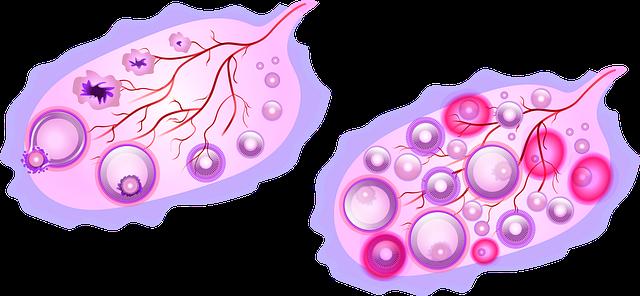 ovulație