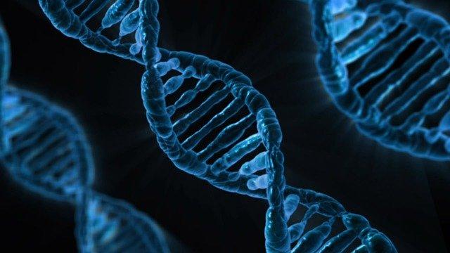 infertilitate masculina gene